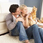 Cats and Relationships